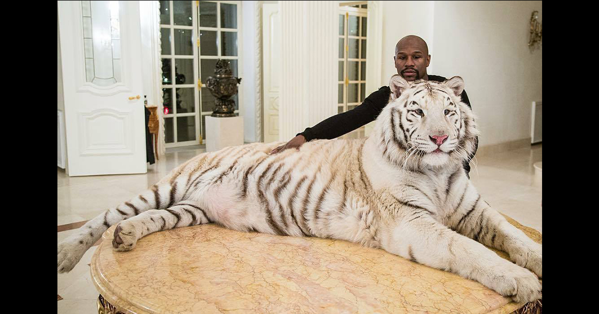 Video Floyd Mayweather Drops 4 Million Cash For Another Siberian
